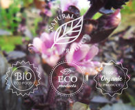 Vector typography eco labels set on spring flower blurry background for card, banner or web design. Royalty Free Stock Photos