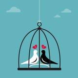 Vector uma imagem de dois pássaros em uma gaiola Fotos de Stock