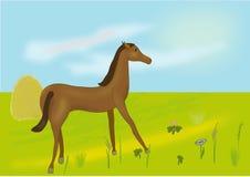 Vector un cavallo su un prato Immagini Stock