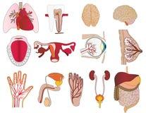 Vector un insieme dei corpi un fegato Fotografie Stock