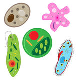 Vector unicellulars set Royalty Free Stock Photo