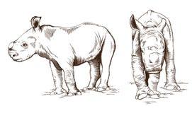 Rhinos del bambino Immagini Stock