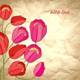 Vector valentine background with tulips Royalty Free Stock Images