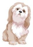 Vector van bolognese hond Stock Afbeelding