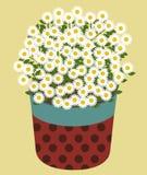 Vector van Daisy Flower Royalty-vrije Stock Afbeelding