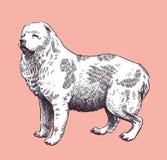 Vector van de Herder van de hond de Kaukasische medio-Aziatische Royalty-vrije Stock Afbeelding