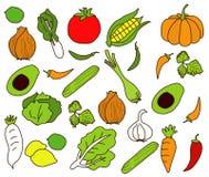 Vector van groenten Uit de vrije hand Stock Fotografie