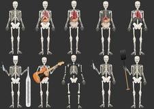 vector Vastgesteld Skelet van de persoon Stock Afbeelding