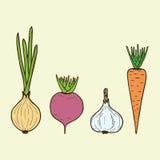 Vector vegan vegetables - onion, carrot, beet, garlic. Vect Stock Photography