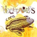 Vector vegetable background Stock Photos