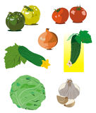 Vector vegetables. Different vector vegetables on a white background Royalty Free Stock Images