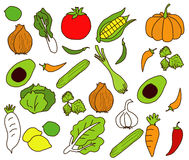 Vector of vegetables Freehand Stock Photography