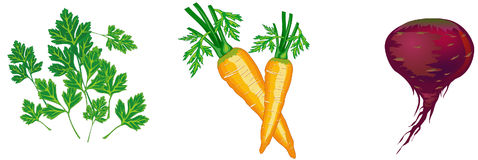 Vector vegetables illustration Stock Photo