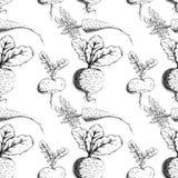 Vector vegetables. Ink vegetables food background pattern Stock Images