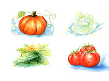 Vector vegetables, painting on white background Royalty Free Stock Images
