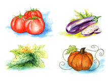Vector vegetables, painting on white background Stock Image