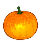 Vector vegetables: pumpkin Royalty Free Stock Image