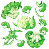 Vector vegetables set with broccoli, green string beans  Royalty Free Stock Photos