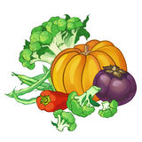 Vector vegetables set with broccoli, green string beans, pepper, Royalty Free Stock Photography