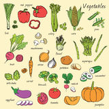 Vector vegetables set. Royalty Free Stock Image