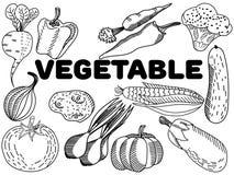 Vector vegetal del colorante para los adultos Foto de archivo libre de regalías