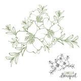 Vector verde y negro de Camellia Bouquet a mano libre illustration