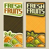 Vector vertical banners for Fresh Fruits. With copy space: pineapple, melon, green pear, juicy watermelon, orange, fruit mix, layout with original font for text Stock Photos