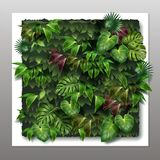 Vector vertical garden. Vector square vertical garden or green wall with tropical green leaves, close-up on gray background Royalty Free Stock Images