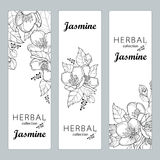 Vector vertical templates with outline Jasmine, bud and leaves isolated on white. Floral design for poster, banner, package Stock Image