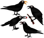 Vector vier van Zwarte Vogels - Kraaien Stock Afbeeldingen