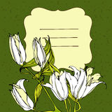 Vector vignette background with white lily flowers Royalty Free Stock Photography