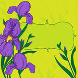 Vignette with iris flowers Royalty Free Stock Photography