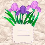 Vector vignette with iris flowers Stock Photography
