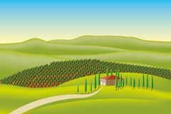 Vector vineyard Stock Photos