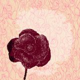 Vector vintage background with poppy Stock Image