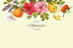 Vector vintage banner. Vector vintage natural banner with hibiscus flowers, citrus fruits and rose hip. Design for tea, juice, natural cosmetics, baking,candy stock image
