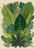 Vector vintage composition. Exotic leaves. Royalty Free Stock Images