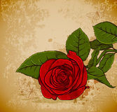 Vintage red rose Stock Image