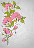 Sweet pea. Vector vintage floral  background with sweet pea Royalty Free Stock Photography