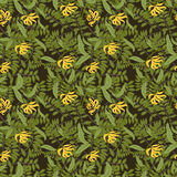 Vector vintage floral ylang-ylang illustration Stock Images