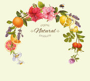 Vector vintage frame. Vector natural round frame with hibiscus flowers, citrus fruits and rose hip. Design for tea, juice, natural cosmetics, baking,candy and Royalty Free Stock Images