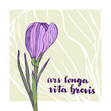 Vector vintage greeting card with crocus flower and lettering. Latin text - Ars longa vita brevis.  Royalty Free Stock Photography