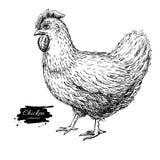 Vector vintage hand drawn chicken. Engraved illustration. Rural stock illustration