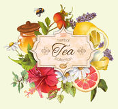 Vector vintage herbal tea banner Royalty Free Stock Photography