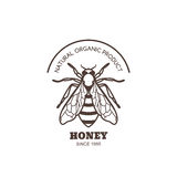 Vector vintage honey label design. Outline honeybee logo or emblem. Linear bee isolated on white background. Stock Images