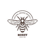 Vector vintage honey label design. Outline honeybee logo or emblem. Linear bee  on white background. Royalty Free Stock Images