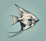 Vector vintage illustration of fish. Vector vintage illustration of little fish over blue background Royalty Free Stock Images