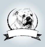 Vector vintage label with bulldog head Stock Photo