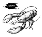 Vector vintage lobster drawing. Hand drawn monochrome seafood il Stock Photos
