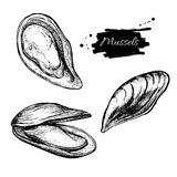 Vector vintage mussel set drawing. Hand drawn monochrome seafood Stock Image